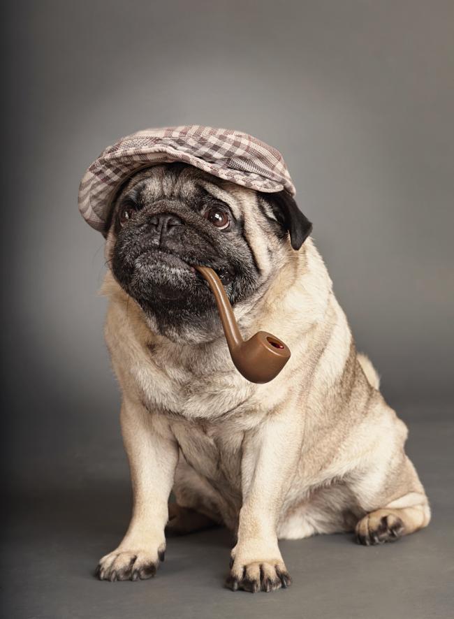 pipe smoking dog 3