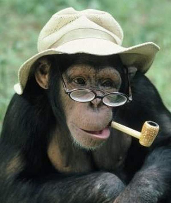 Monkey-smoking-pipe